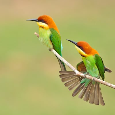 image of two colorful birds